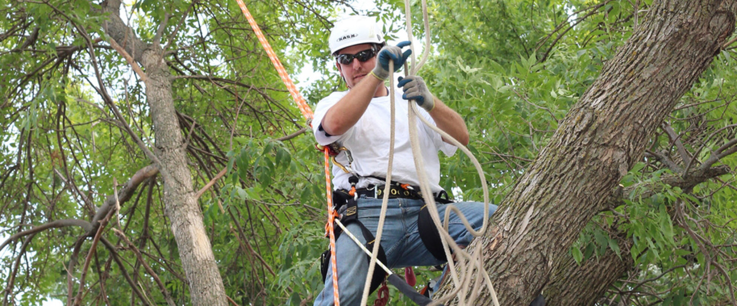 Tree service Rochester MN