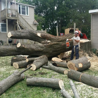 tree removal rochester mn