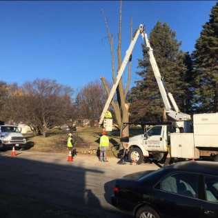 tree trimming rochester mn