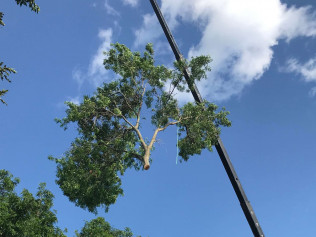 crane-assisted tree removal rochester mn